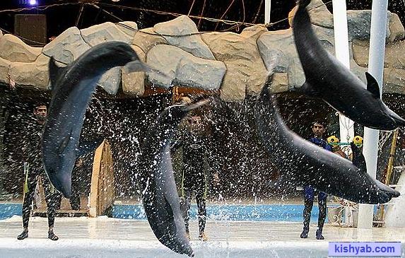 دلفین کیش