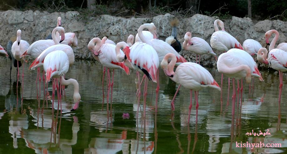 تصاویر دیدنی باغ پرندگان در کیش