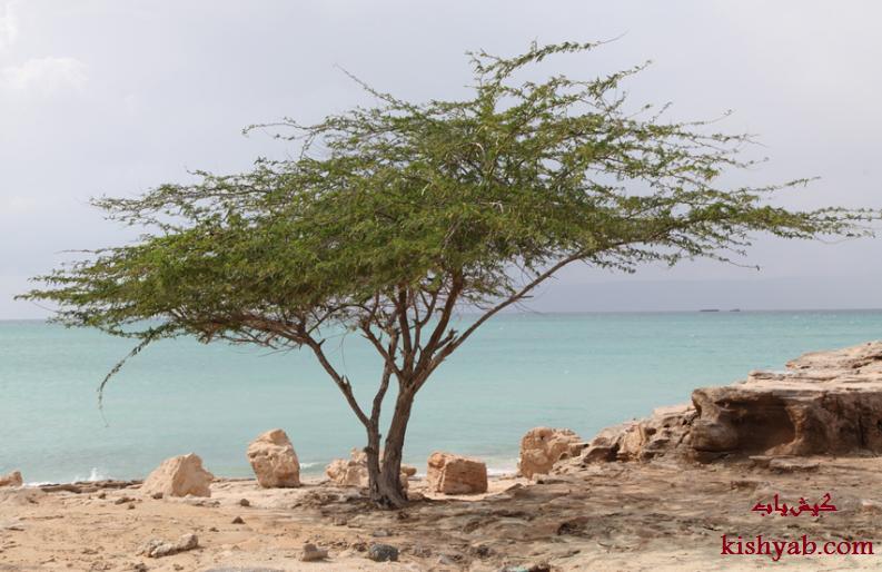 پوشش گیاهی زیبا در جزیره کیش /تصاویر