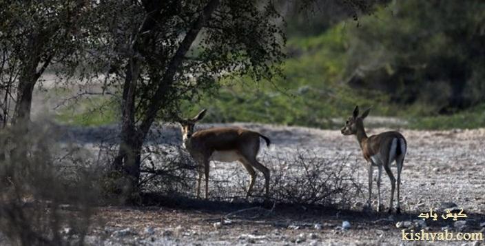 ساخت پارک حیات وحش در جزیره کیش