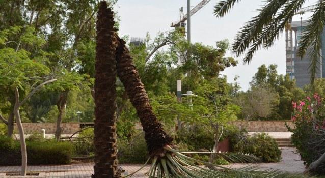وجود مجوز برای درختان منطقه آزاد کیش