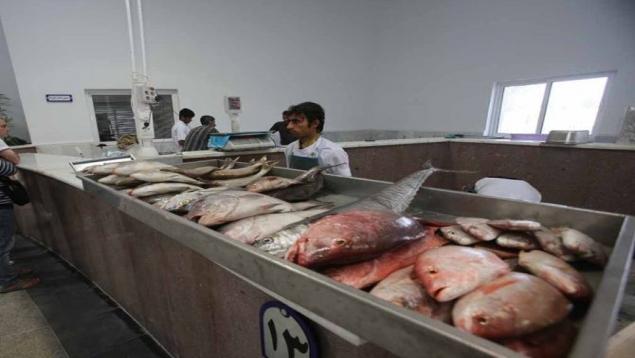 کفپوش جدید در بازار ماهی