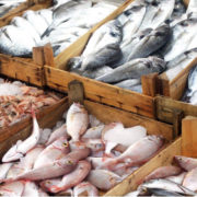 طراحی و راه اندازی بازار ماهی کیش جدید